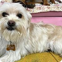 Adopt A Pet :: Princess 1 - Las Vegas, NV