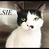 Adopt A Pet :: Elsie - Brandon, FL