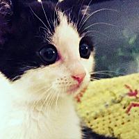 Adopt A Pet :: Emmanuelle Mimieux - Durham, NC