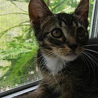 Adopt A Pet :: Spanky - Holmes Beach, FL