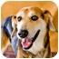 Photo 2 - Shepherd (Unknown Type) Mix Dog for adoption in Somerset, Pennsylvania - Cooper