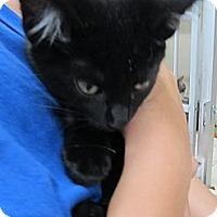Adopt A Pet :: Lil' Bit - Riverhead, NY