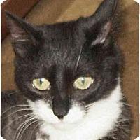Adopt A Pet :: Hiedi - Crescent City, CA