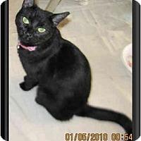 Adopt A Pet :: Jasmine - Catasauqua, PA