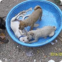 Adopt A Pet :: Munskin - Wedowee, AL