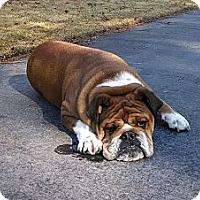 Adopt A Pet :: Chauncey - conyers, GA