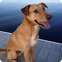 Adopt A Pet :: Reva - Gig Harbor, WA