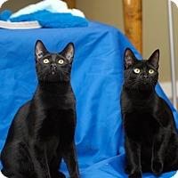 Adopt A Pet :: Stella (female) & Anton (male) - Duncan, BC