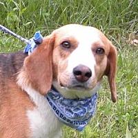Adopt A Pet :: Merle - Princeton, KY