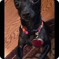 Adopt A Pet :: Macadamia (Macsi) - Shawnee Mission, KS