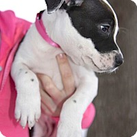 Adopt A Pet :: Queenie - Reisterstown, MD