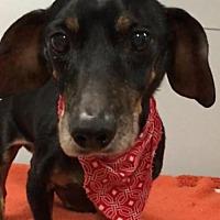 Adopt A Pet :: Bruno - Weston, FL