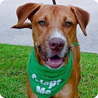 Adopt A Pet :: Thunder - Houston, TX