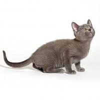 Adopt A Pet :: Jasper - Kingston, ON