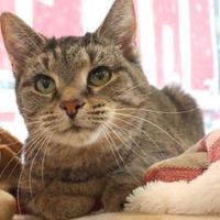 Adopt A Pet :: Sarah - Bristol, IN