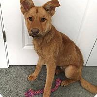 Adopt A Pet :: Floyd - Denver, CO