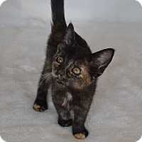 Adopt A Pet :: Elsa - Aurora, CO