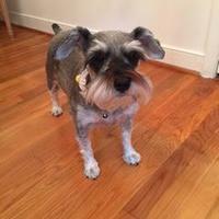 Adopt A Pet :: Jonquil - Richmond, VA
