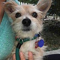 Adopt A Pet :: Tango - Encino, CA