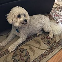 Adopt A Pet :: Maxx - Princeton, KY