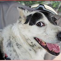Adopt A Pet :: Hank easy sidekick - Sacramento, CA