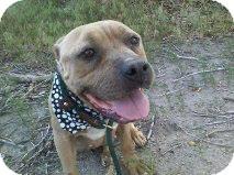 Pit Bull Terrier Mix Dog for adoption in Alliance, Nebraska - Hope