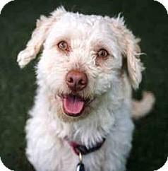 Terrier (Unknown Type, Small) Mix Dog for adoption in Vista, California - Sebastian