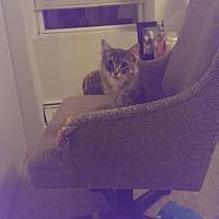 Adopt A Pet :: Jane - New York, NY