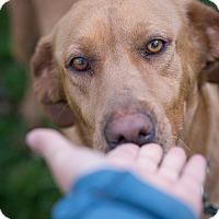 Adopt A Pet :: Laura - Cumming, GA