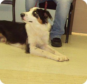 Collie Mix Dog for adoption in Mt. Vernon, Illinois - Nubian