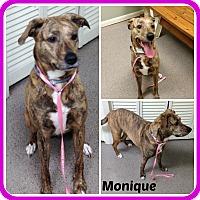Adopt A Pet :: MONIQUE - Malvern, AR
