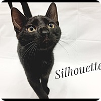 Adopt A Pet :: Silhouette - Brandon, FL