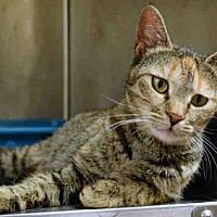 Adopt A Pet :: PEARLENE - Ogden, UT
