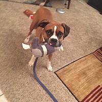 Adopt A Pet :: Ginger - Austin, TX