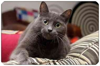 Domestic Shorthair Cat for adoption in Sterling Heights, Michigan - Fern - ADOPTED!