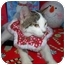 Photo 2 - Turkish Van Cat for adoption in Taylor Mill, Kentucky - Samson
