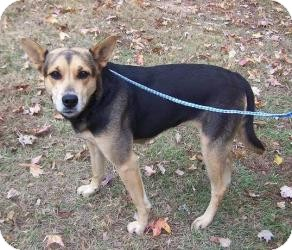Shepherd (Unknown Type) Mix Dog for adoption in Irmo, South Carolina - Twix