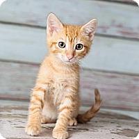 Adopt A Pet :: Axel - Eagan, MN