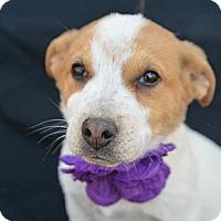 Adopt A Pet :: Reba McEntire - Plano, TX