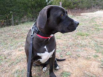 Labrador Retriever Mix Dog for adoption in Oakland, Arkansas - Malinda