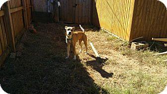 Husky Mix Dog for adoption in Demorest, Georgia - Mystique