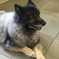 Adopt A Pet :: RAVEN - Southern California, CA