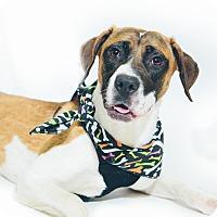 Adopt A Pet :: Daphne - New Castle, PA