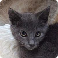 Adopt A Pet :: Thatcher - San Diego, CA