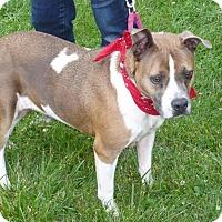 Adopt A Pet :: June - Mineral, VA