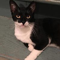 Adopt A Pet :: Henri - Hampton, VA