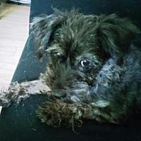 Adopt A Pet :: PIPER - Jackson, NJ