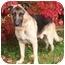 Photo 1 - German Shepherd Dog Dog for adoption in Rochester/Buffalo, New York - Whiskey