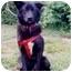 Photo 2 - Border Collie/Spitz (Unknown Type, Medium) Mix Dog for adoption in Baldwin, New York - Jeanie