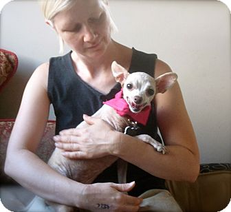Chihuahua Mix Dog for adoption in Los Angeles, California - Adorable Chica-VIDEO
